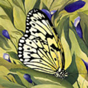 Gold Butterfly In Branson Art Print