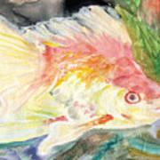 Gold Fish With Purple Art Print
