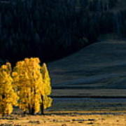 Gold In The Lamar Valley Art Print