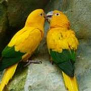 Gold Parakeets Art Print
