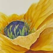 Gold Poppy Art Print