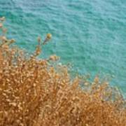 Gold Thistles And The Aegean Sea Art Print