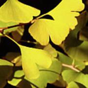 Golden Autumn In Tokyo Art Print