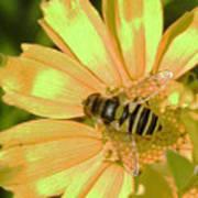 Golden Bee Art Print