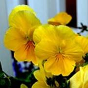 Golden Blooms Beside The Porch Art Print