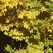 Golden Branches Art Print