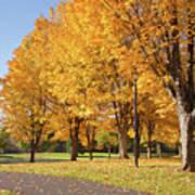 Golden Colors In Autumn Bellavista Park Oregon. Art Print