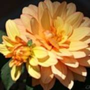 Golden Dahlia With Bud Art Print