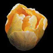 Golden Double Tulip Art Print