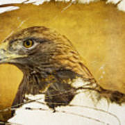 Golden Eagle Grunge Portrait Art Print