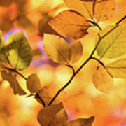 Golden Foliage Art Print