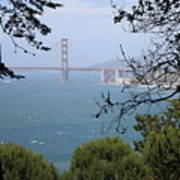 Golden Gate Bridge Through The Trees Art Print