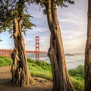 The Trees Of The Golden Gate Art Print