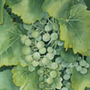 Golden Green Grapes Art Print