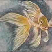 Golden Koi Art Print