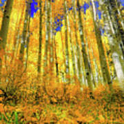 Golden Light Of The Aspens - Colorful Colorado - Aspen Trees Art Print
