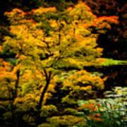 Golden Maple Art Print