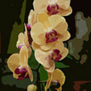 Golden Moth Orchid Art Print
