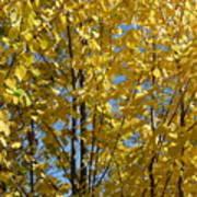 Golden October Art Print