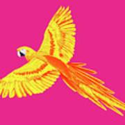 Golden Parrot Art Print
