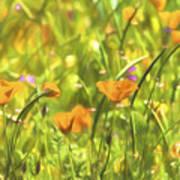 Golden Poppies In A Gentle Breeze  Art Print