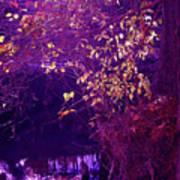 Golden Purples Art Print