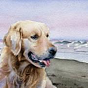 Golden Retriever At The Beach Art Print