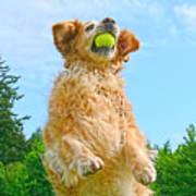 Golden Retriever Catch The Ball  Art Print