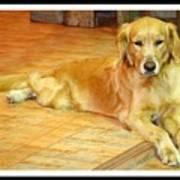 Golden Retriever Dog Art Print