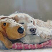 Golden Retriever Dog Sleeping With My Friend Art Print by Jennie Marie Schell