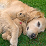 Golden Retriever Dog Teddy Bear Love Art Print