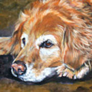 Golden Retriever Senior Art Print