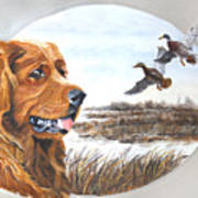 Golden Retriever With Marsh Scene Art Print