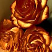 Golden Roses 3 Art Print