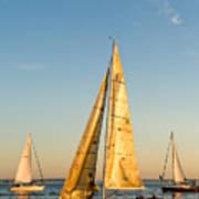 Golden Sails Art Print