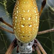 Golden Silk Spider 1 Art Print