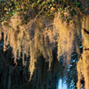 Golden Spanish Moss Art Print