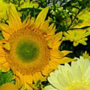 Golden Sunflower Yellow Bouquet By Kaye Menner Art Print