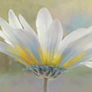 Golden Sunshine On A Most Splendid Daisy Art Print
