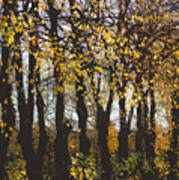 Golden Trees 1 Art Print