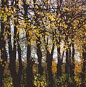 Golden Trees 1 Art Print