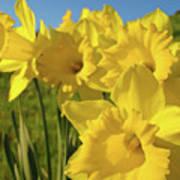 Golden Yellow Daffodil Flower Garden Art Prints Baslee Troutman Art Print