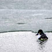 Goldeneye On Ice's Edge Art Print