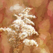 Goldenrod Plant In Fall Art Print