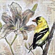 Goldfinch And Lily Art Print