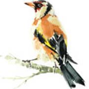 Goldfinch Bird  Art Print