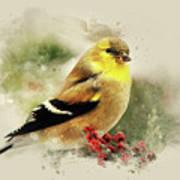 Goldfinch Watercolor Art Art Print