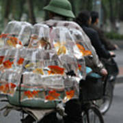 Goldfish In A Bag Vietnam On Bicycle Unique  Art Print