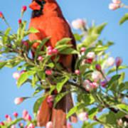Good Morning Mr Cardinal  Art Print