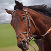 Good Morning - Racehorse On The Gallops Art Print